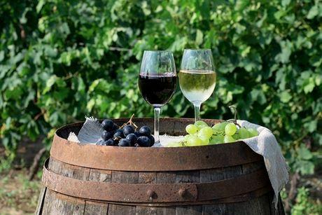 Biologische wijn kopen