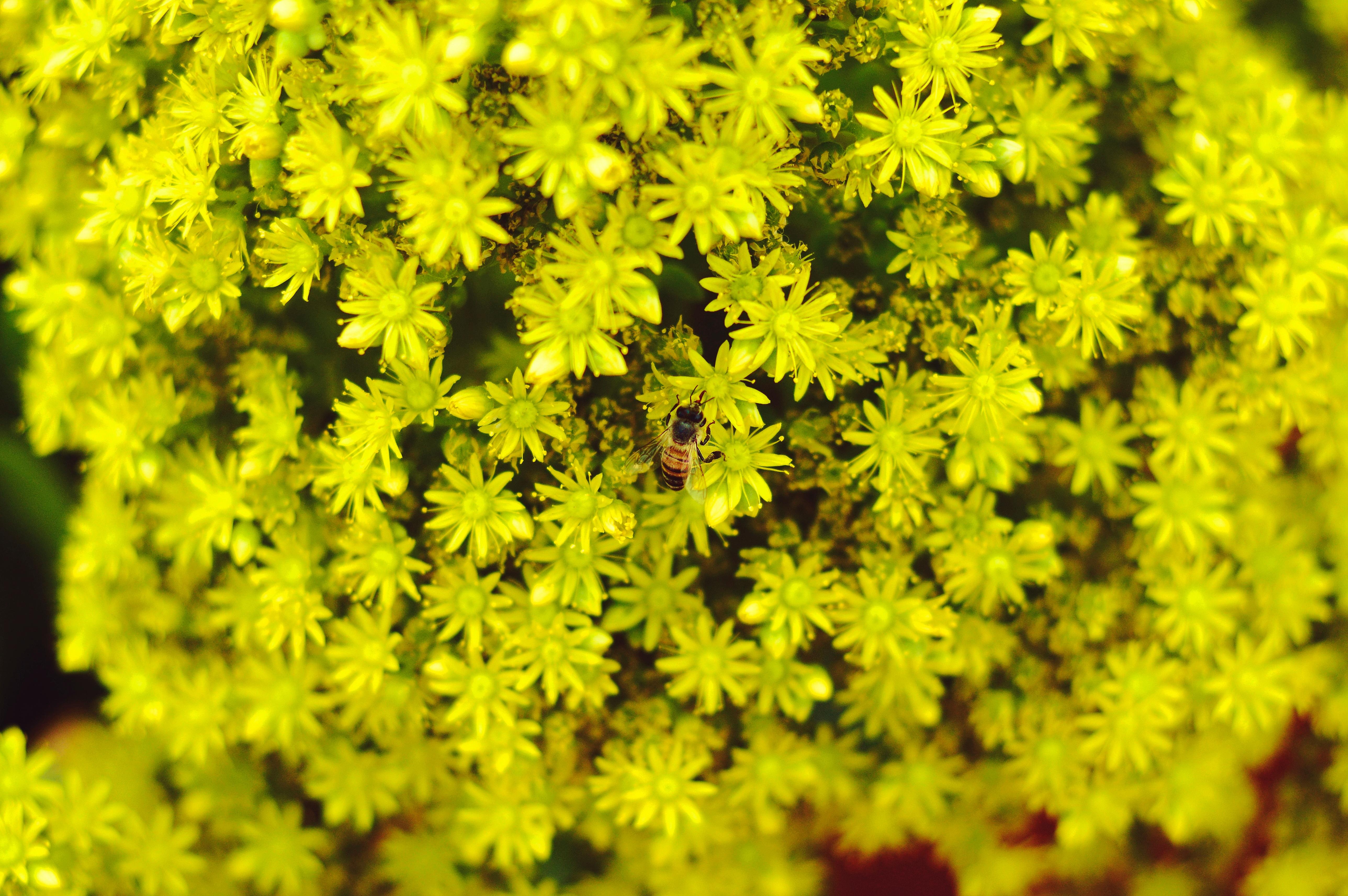 Bijenpollen wat zijn het en wat kun je ermee